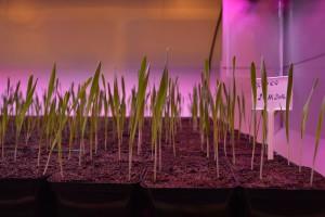 Innowacje w hodowli roślin