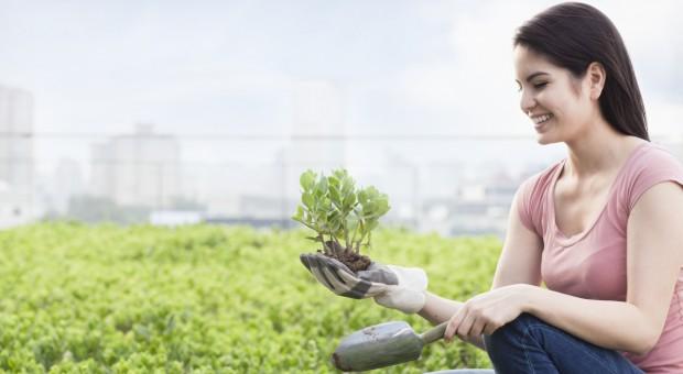 Prof. B. Filipek-Mazur: Na poprawę jakości powietrza w aglomeracjach wpływa rolnictwo miejskie