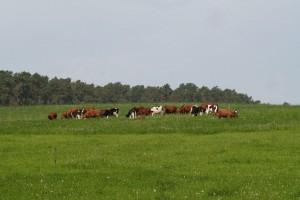Nowość do nawożenia traw pastewnych