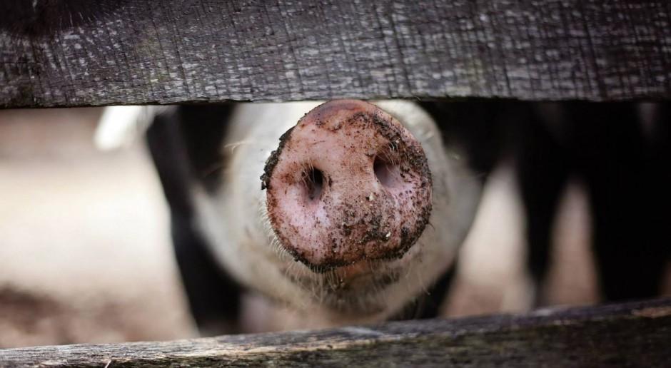 ARiMR zrefunduje 80 proc. kosztów bioasekuracji gospodarstw ze stref ASF