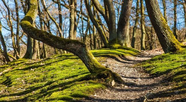 Pozycja prawna prywatnych właścicieli działek leśnych za słaba?