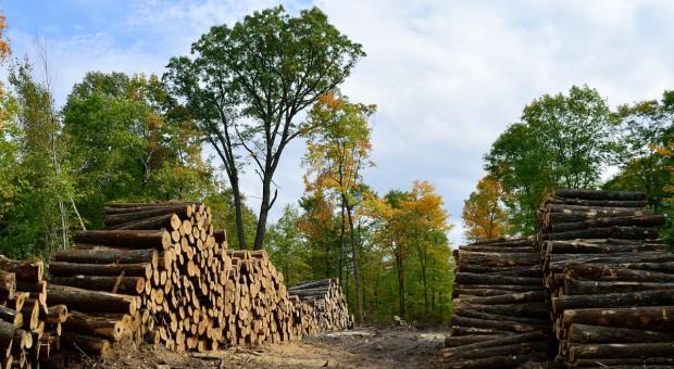 Apel do eurodeputowanych, by powstrzymali spalanie drzew