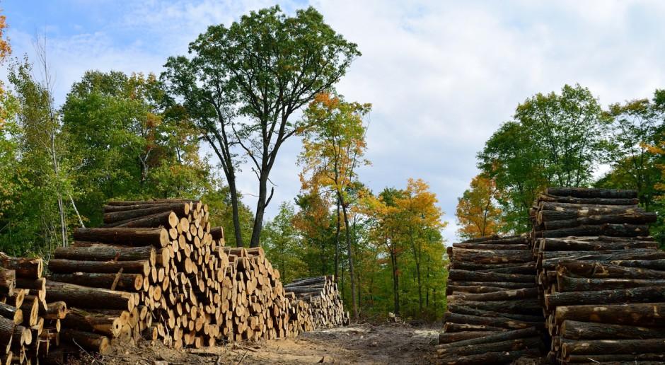 UE: Naukowcy i NGO apelują do eurodeputowanych, by powstrzymali spalanie drzew