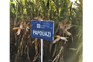 Papouazi FAO 260