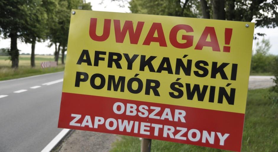 Warmińsko-mazurskie: Trzy kolejne ogniska ASF u trzody chlewnej