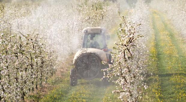 Czechy: Pestycydy w jabłkach z Polski
