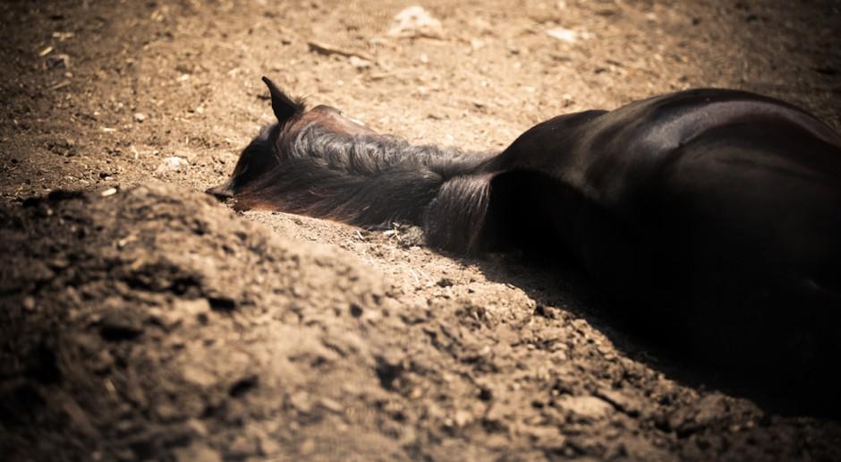 Wielkopolskie: Znęcał się nad końmi, odpowie przed sądem