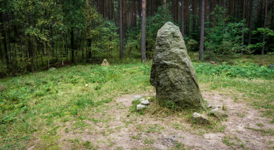 Tajemnicze kamienne kręgi odsłonili leśnicy w Nadleśnictwie Lidzbark
