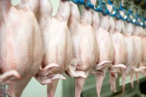 Większy eksport drobiu z krajów Mercosur zagrozi polskiemu drobiarstwu