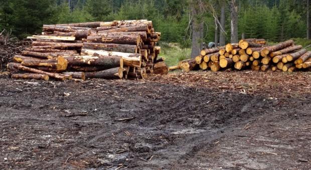 Podkarpackie: leśnicy zamierzają sprzedać ponad 2 mln m sześc. drewna