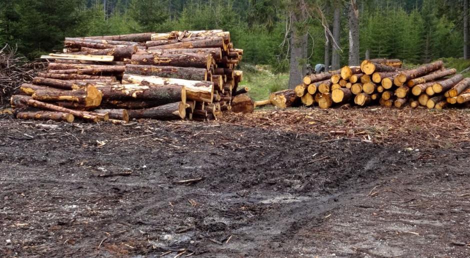 Kowalczyk do KE: Nie prowadzimy gospodarki leśnej w Puszczy