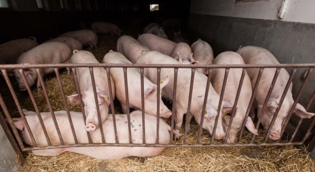 Rosja rośnie w siłę w produkcji mięsa