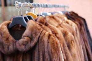 Izrael pierwszym krajem zakazującym handlu futrami naturalnymi na potrzeby mody