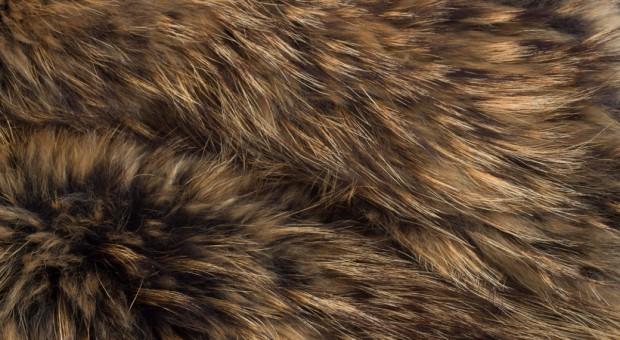 Zakaz hodowli zwierząt futerkowych w Polsce z poparciem większości ludzi na świecie