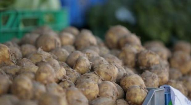 Wysoka produkcja ziemniaka, niskie ceny