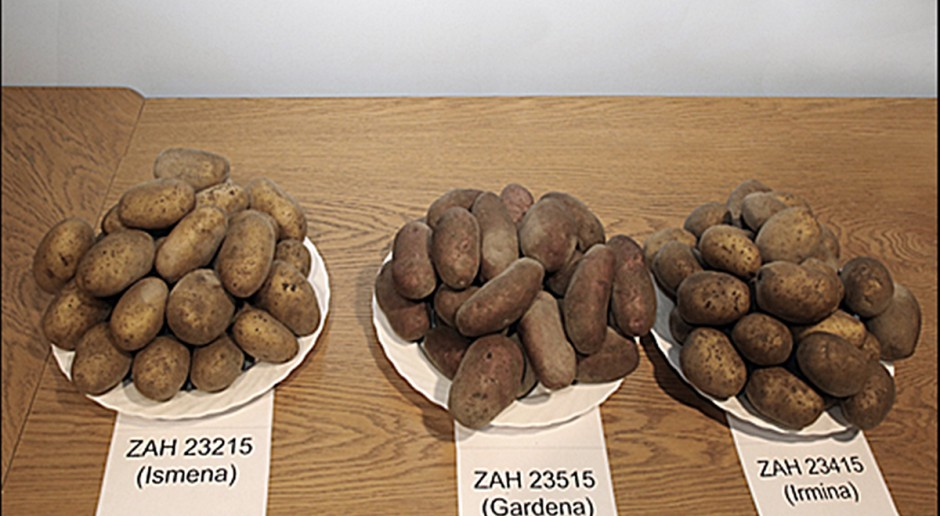 3 nowe odmiany ziemniaka jadalnego