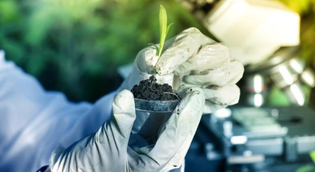 Komisja Europejska zatwierdza siedem nowych odmian GMO