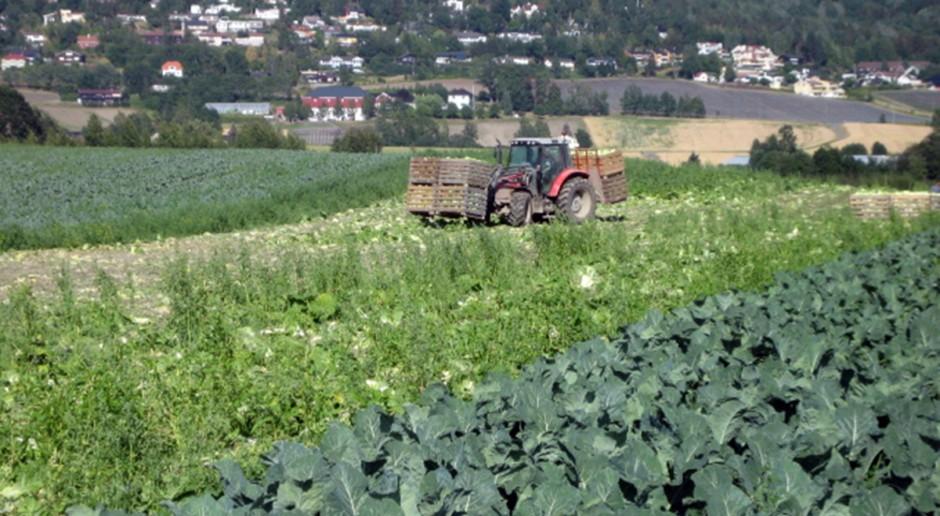 Nowe rejestracje odmian wśród roślin warzywnych
