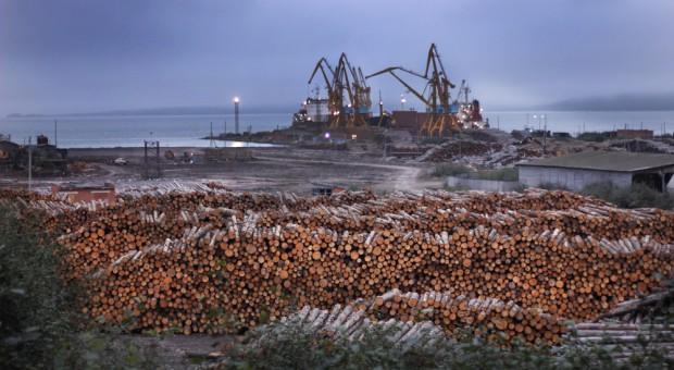 Lasy Państwowe - drewno płynie za morze