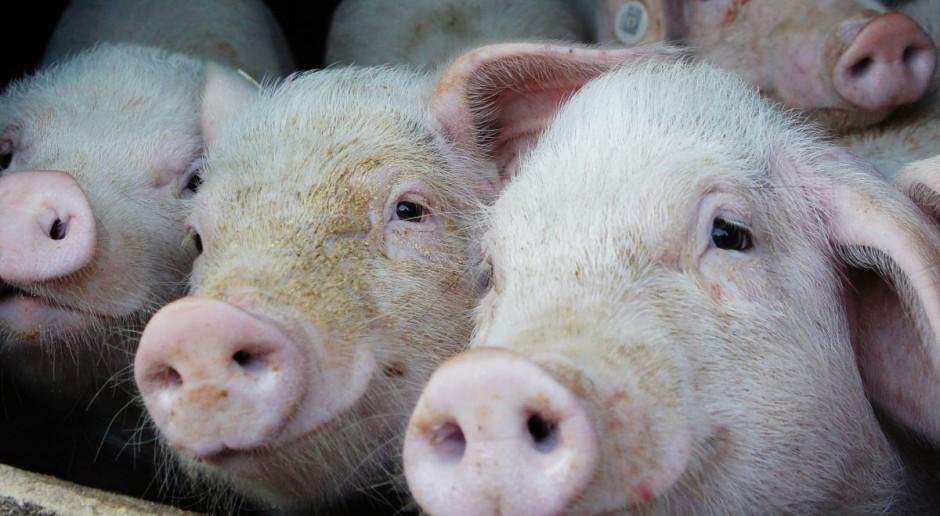 Lech: Nowe zasady bioasekuracji będą obowiązkowe