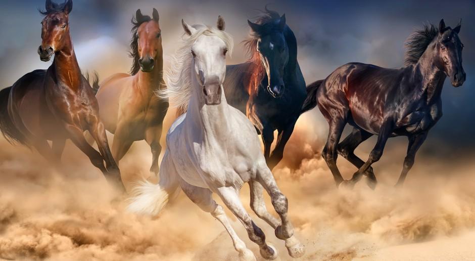 Żywienie szyte na miarę koni - mniej zbóż, więcej włókna - dla zdrowia i kondycji koni