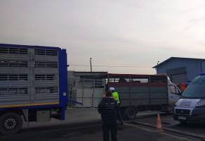 W każdym ze skontrolowanych transportów stwierdzono nieprawidłowości.