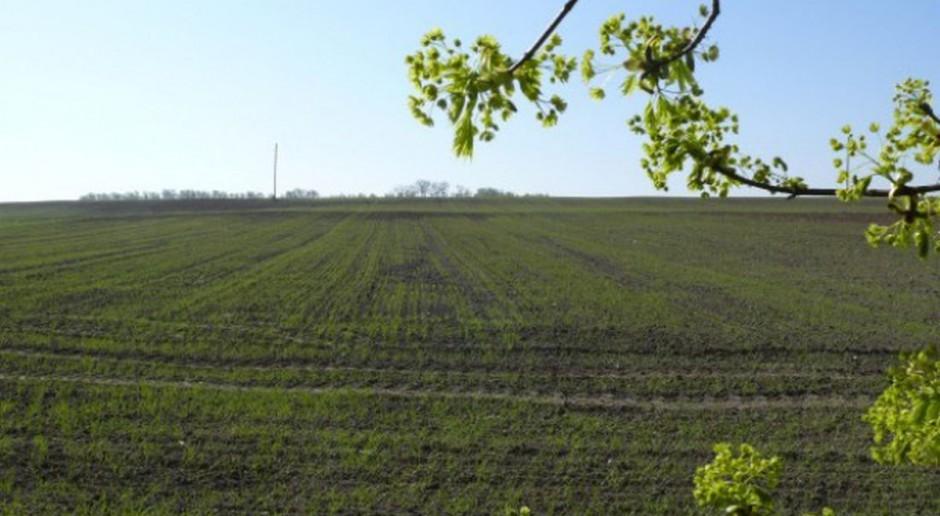 LOZ zbóż jarych w województwie świętokrzyskim