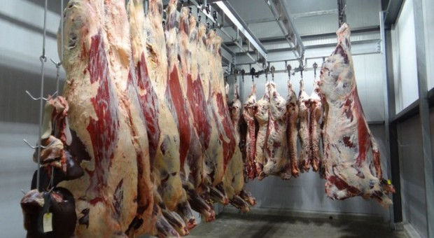 Argentyna wraca na światowy rynek wołowiny