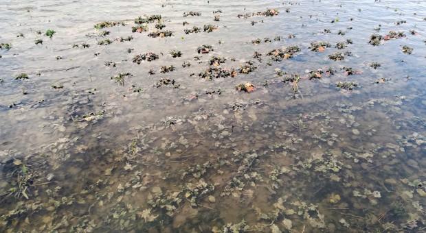 Martwią zastoiska wody na polach