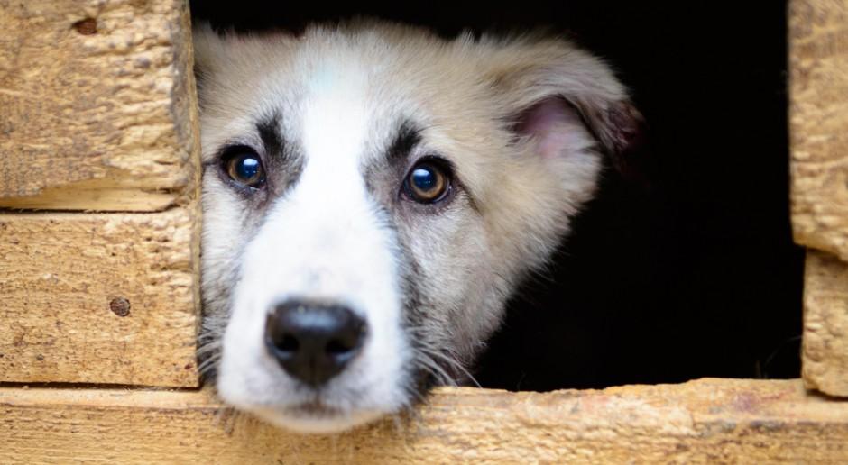 Rośnie liczba bezdomnych psów i kotów