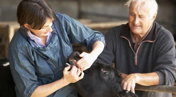 UE zainwestuje 154 mln euro w strategie dotyczące chorób zwierząt i roślin