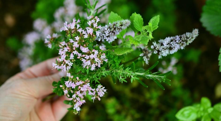 Fitoinżynieria rozpoczyna się od właściwej uprawy roślin