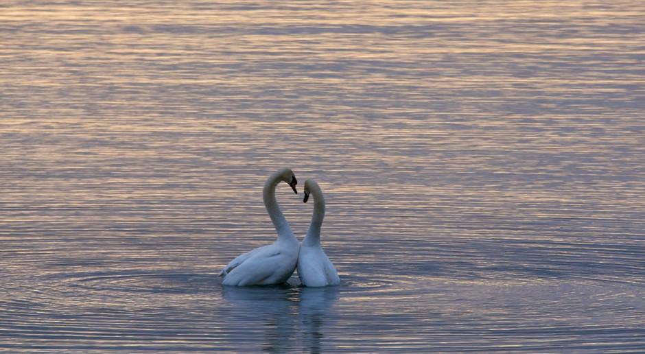 Monogamia to wśród zwierząt dość rzadkie zjawisko
