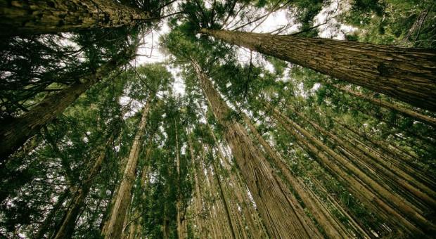 MŚ: O kluczowej roli lasów na komitecie FAO
