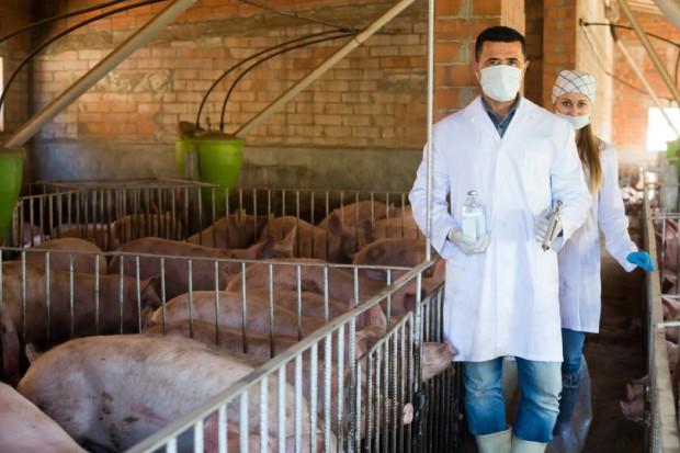 Walka z ASF nie może ograniczać się do bioasekuracji