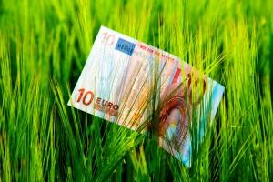 Parlamentarne komisje rolnictwa V4 za wyrównaniem płatności bezpośrednich