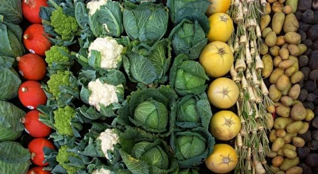 Producenci ziemniaków i warzyw spod Sieradza apelują do rządu o interwencję