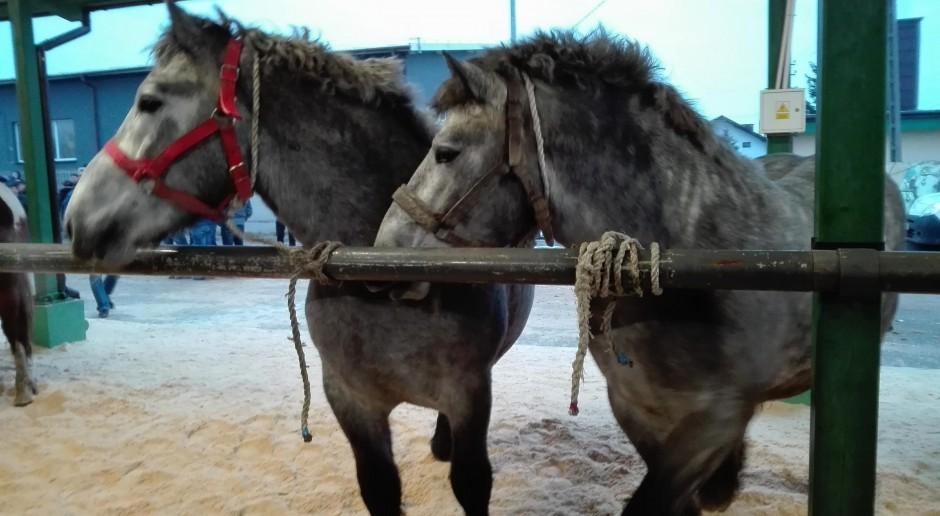 Wstępy 2018 pod lupą obrońców praw zwierząt