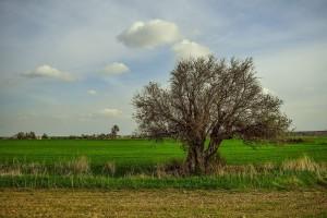 KOWR wydzierżawi ziemię we współpracy tylko z dużymi związkami rolników