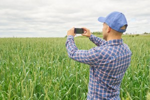 3 mln zł na dofinansowanie dla polskich startupów z sektora rolniczego