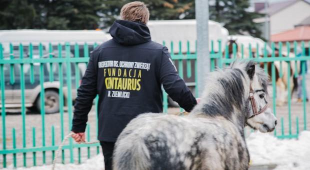 Sąd: Zakaz manifestacji na jarmarku końskim zgodny z prawem