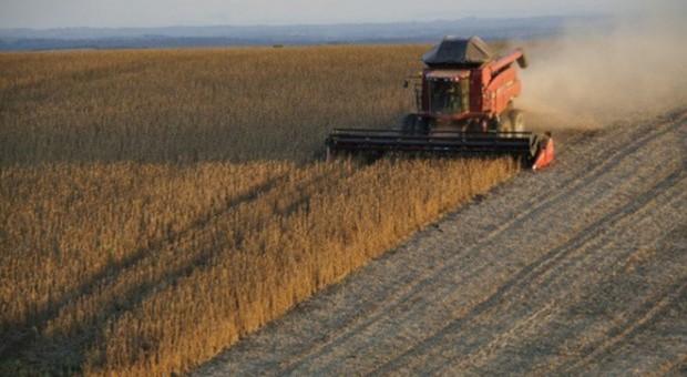 IGC: Mniejsza prognoza światowej produkcji soi w sezonie 2017/2018