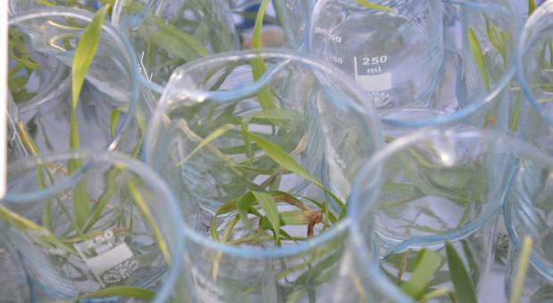 Corteva Agriscience – nowy pion rolniczy DowDuPont