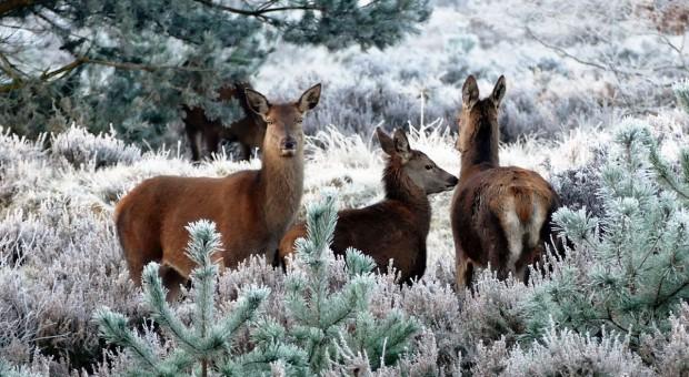 Komu wolno mieć jelenia czy strusia?