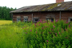 Finlandia: Przyspieszyły zmiany strukturalne w rolnictwie