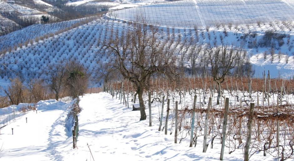 Włochy: Ponad 300 mln euro strat w rolnictwie z powodu ataku zimy