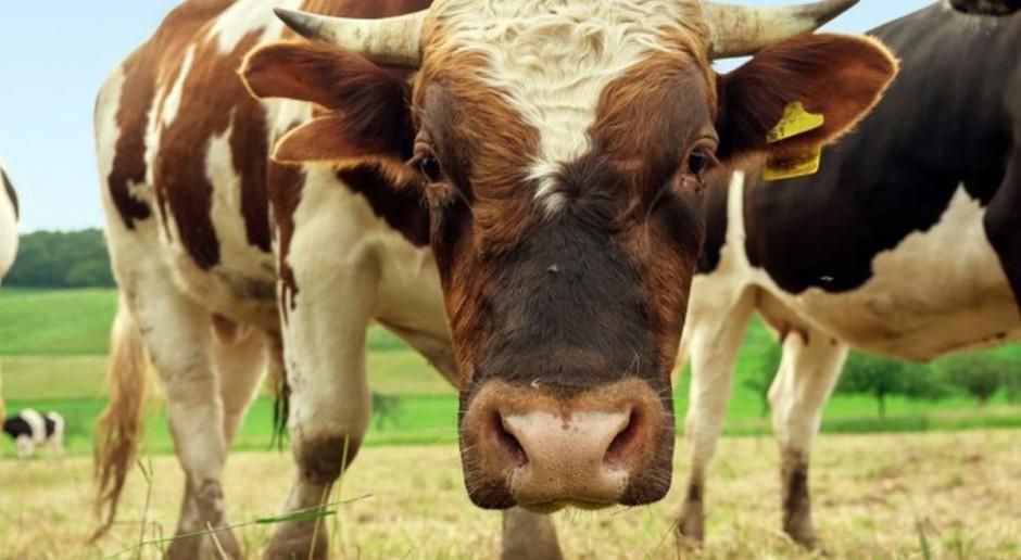 Niemieccy rolnicy wyprodukują mniej zwierząt rzeźnych