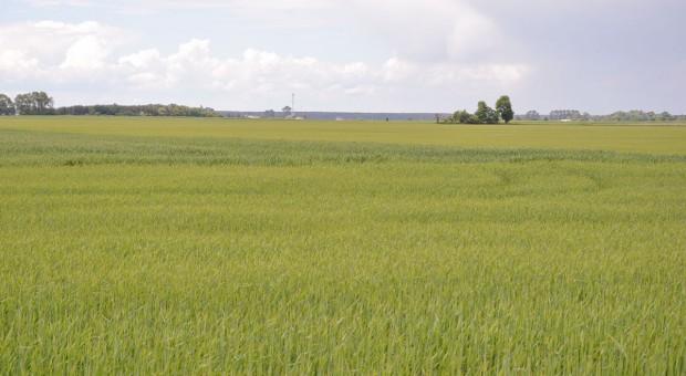 Zaprawy ratują plon - ochrona zbóż kłosowych
