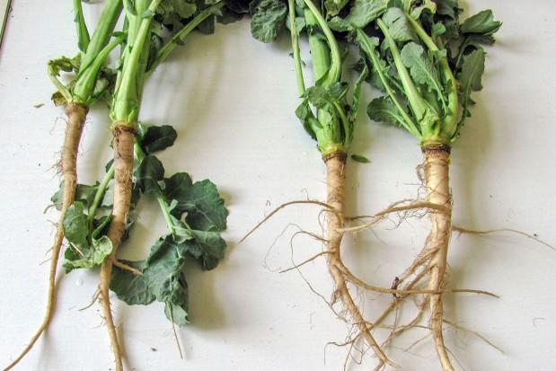 Odstresować rośliny po zimie