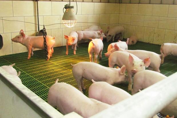 Kwasy huminowe w walce o zdrowie zwierząt